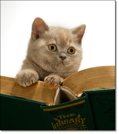 A photograph of My first book