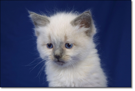 A photograph of 
