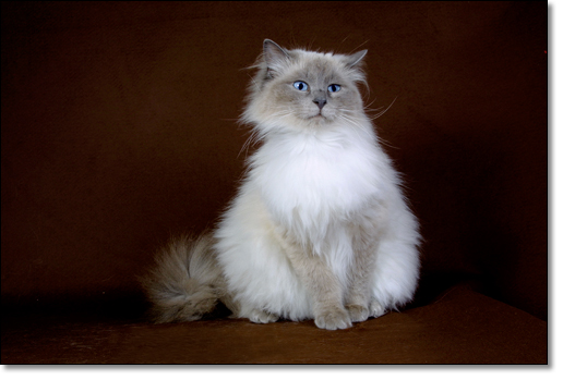 A photograph of A socialite. 