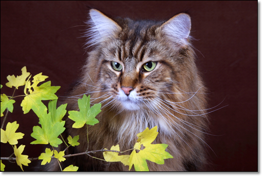 A photograph of Mabalakat Maltezer