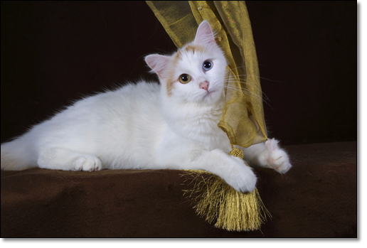 A photograph of A golden lady - full