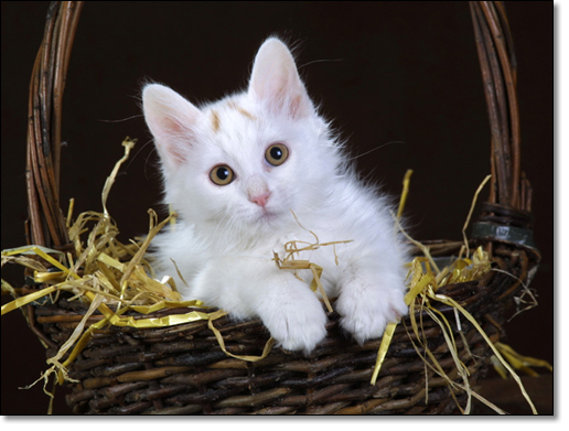 A photograph of Freddiemyboy