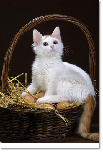 A photograph of A Brooding Hen