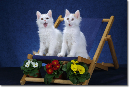 A photograph of Freddiemyboy & Keith E