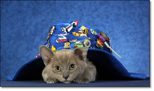 A photograph of Antipodean Traveller