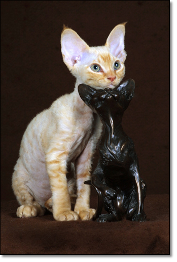 A photograph of Two Rexes