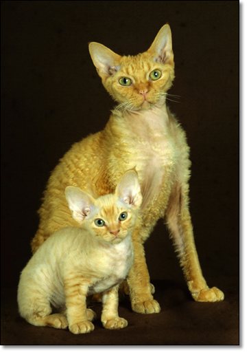 A photograph of Father and son
