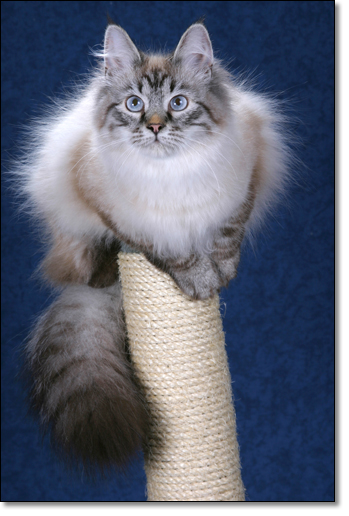 A photograph of On a perch
