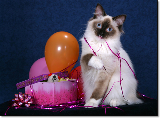 A photograph of Huckleberry