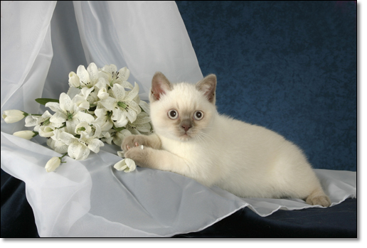 A photograph of The bride