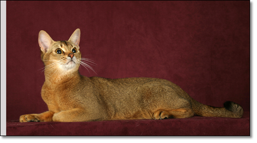 A photograph of Lulu