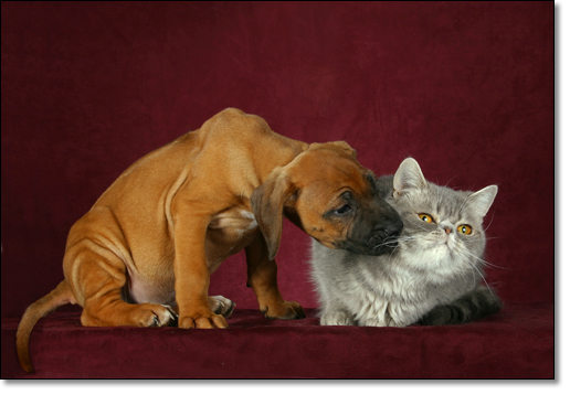 A photograph of Puppy love