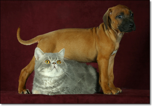A photograph of Criss-crossed
