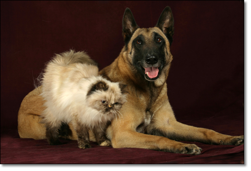 A photograph of I feel very safe