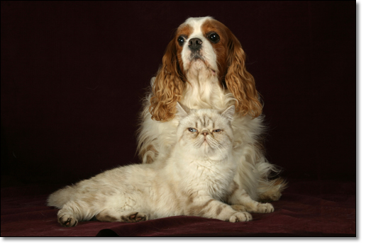 A photograph of Who is the boss?