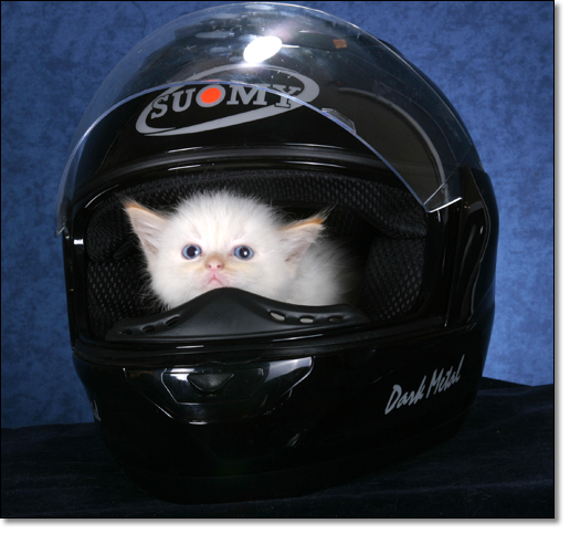 A photograph of I am feeling much safer now