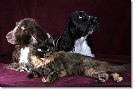 A photograph of Three musketeers