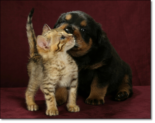 A photograph of Toy Boy and Chubs