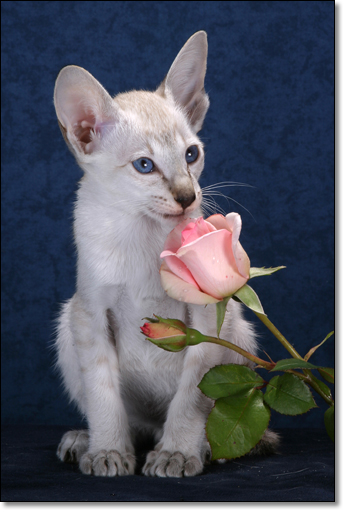 A photograph of I like roses.