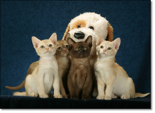 A photograph of We are not afraid