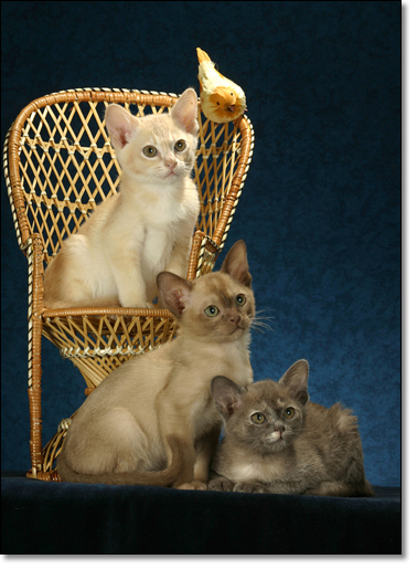 A photograph of Auto-portrait with a bird