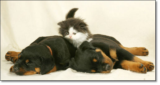 A photograph of Rottie minefield (aka Mission Impossible)
