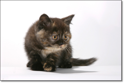 A photograph of Sheephouse Rosie-coco