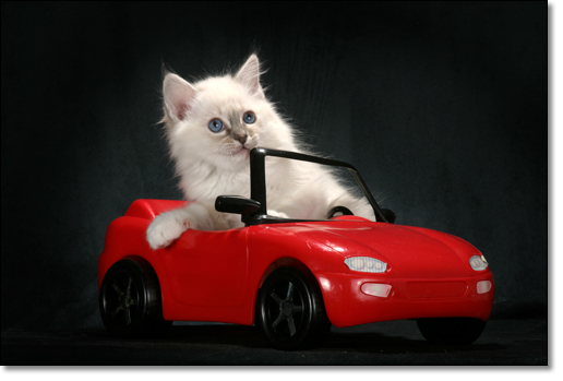 A photograph of The automobilist.