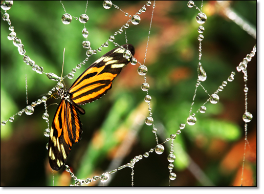 A photograph of Morning Dew