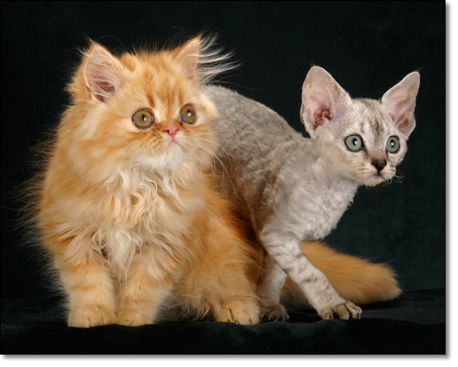 A photograph of Spot the difference