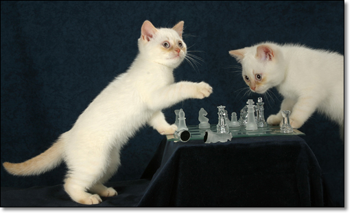 A photograph of Check and Mate