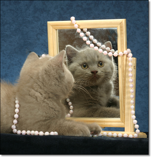 A photograph of A coquette